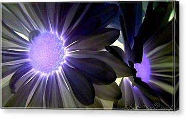 Purple Daisies Negative Effects Canvas Print by Danielle  Parent