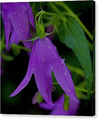 Canvas Print featuring the photograph Purple by Daniel Sheldon