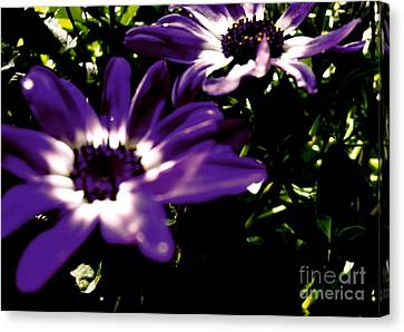 Canvas Print featuring the photograph Purple Daze by Cathy Dee Janes