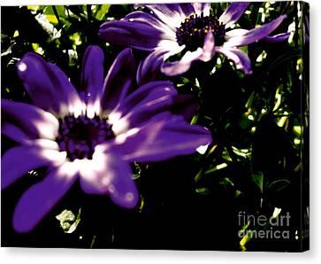 Purple Daze Canvas Print by Cathy Dee Janes