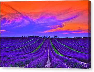 Purple Dream Canvas Print by Midori Chan