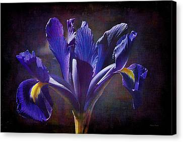 Purple Dutch Iris Canvas Print