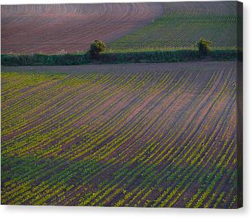 Canvas Print featuring the photograph Purple Fields by Evelyn Tambour