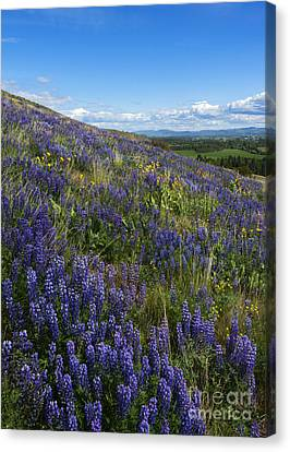 Purple Fields Canvas Print by Mike  Dawson