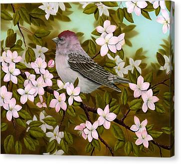 Purple Finch Canvas Print by Rick Bainbridge