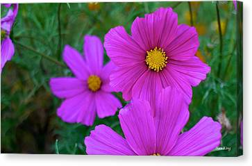 Canvas Print featuring the photograph Purple Flower by Alex King