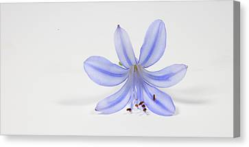 Purple Flower Canvas Print by Cecil Fuselier