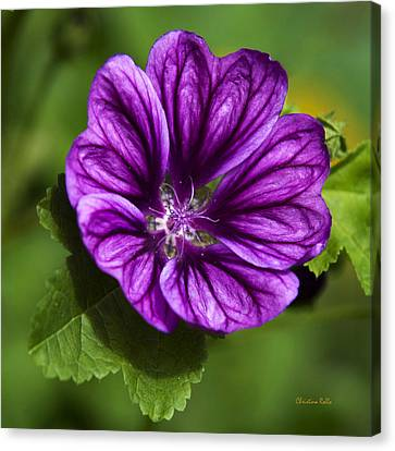 Purple Flower Hollyhock Canvas Print by Christina Rollo