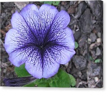 Purple  Flower  Canvas Print by Joyce Woodhouse