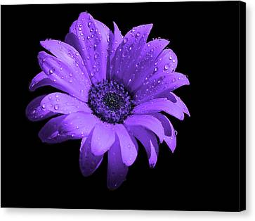 Purple Flower With Rain Canvas Print by Bruce Nutting