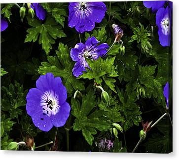 Canvas Print featuring the photograph Purple Flower01 by Timothy Latta