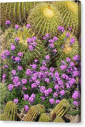 Purple Flowers And Barrel Cacti Canvas Print by Mark Barclay