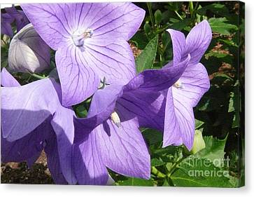 Purple Flowers Canvas Print by Betsy Cotton