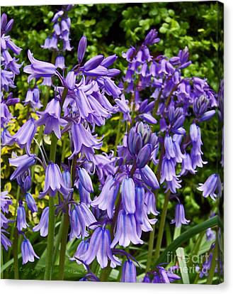 Canvas Print featuring the photograph Purple Flowers by Gena Weiser
