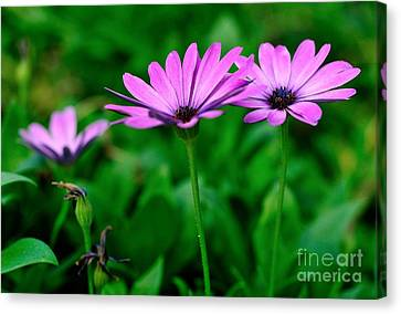 Canvas Print featuring the photograph Purple Flowers by Joe  Ng