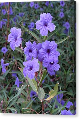 Canvas Print featuring the photograph Purple Flowers by Laurel Powell