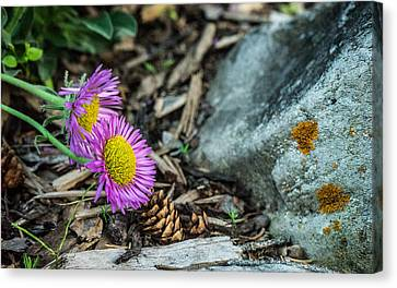 Purple Flowers Pine Cones And Lichens Canvas Print