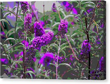 Canvas Print featuring the photograph Purple Flowers by Suzanne Powers