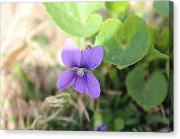 Purple Garden Flower Canvas Print by Khoa Luu