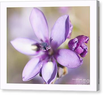 Purple Geranium 2 Canvas Print by Artist and Photographer Laura Wrede
