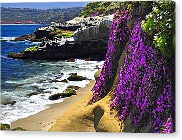 Purple Glory At La Jolla Cove Canvas Print