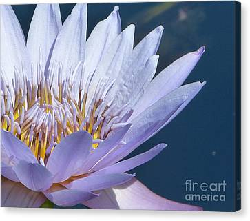 Purple Glory II Canvas Print