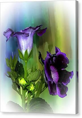 Purple Gloxinia II Canvas Print