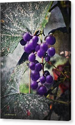 Purple Grapes - Oil Effect Canvas Print by Brian Wallace