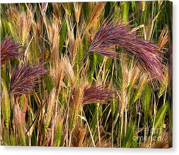 Purple Grasses Canvas Print