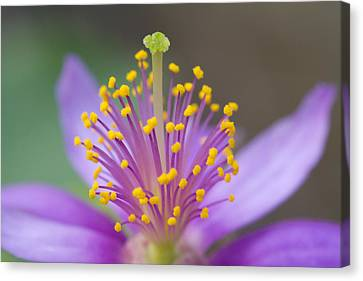 Purple Haze Canvas Print by John Hoey
