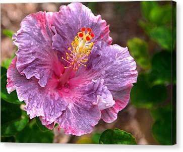 Purple Hibiscus Canvas Print by Brian Harig