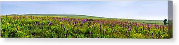 Purple Hills Canvas Print by Eric Benjamin