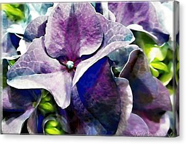 Purple Hydrangea  Flower Canvas Print by Danielle  Parent