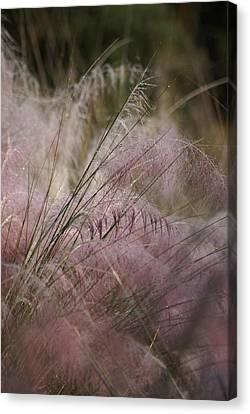 Purple In Bloom Canvas Print by Patricia Twardzik