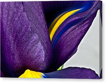 Purple Iris  #2 2010 Canvas Print