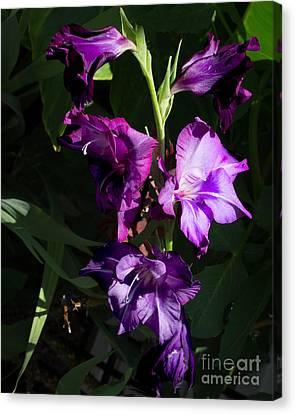 Purple Iris Canvas Print