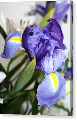Purple Iris Canvas Print by Ellen O'Reilly