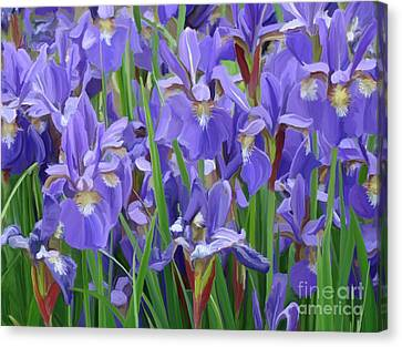 Canvas Print featuring the painting Purple Iris Garden by Tim Gilliland
