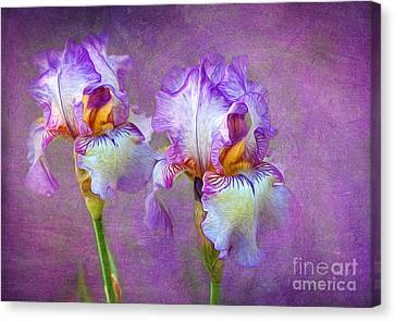 Purple Iris Canvas Print by Lena Auxier
