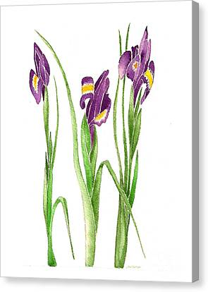 Canvas Print featuring the painting Purple Iris  by Nan Wright