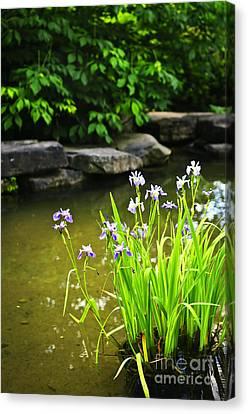 Purple Irises In Pond Canvas Print by Elena Elisseeva