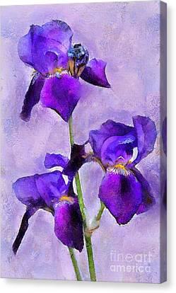 Purple Irises - Painted Canvas Print