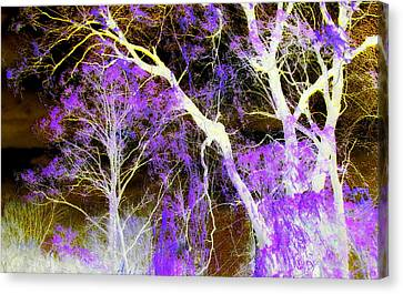 Purple Leaves And White Trees Canvas Print