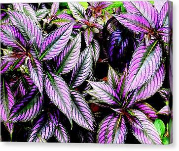 'purple' Canvas Print