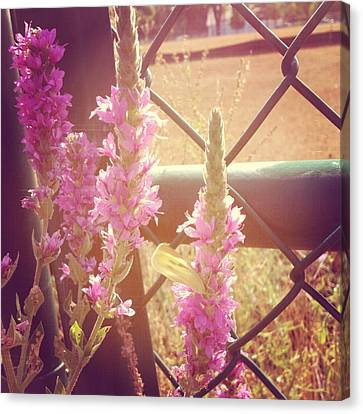 Floral Canvas Print - Purple Loosestrife by Christy Beckwith