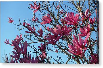 Purple Magnolias Canvas Print