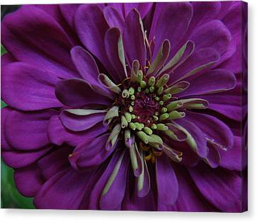 Purple Canvas Print