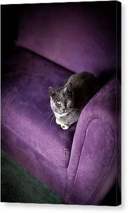 Purple Canvas Print by Mike Reid
