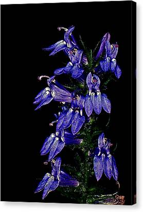 Canvas Print featuring the photograph Purple On Black by David Stine