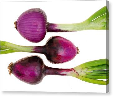 Purple Onions  Canvas Print by Jim Hughes